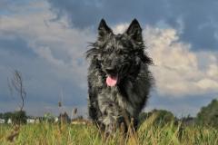 Schöner-Hund-vor-schönem-Himmel
