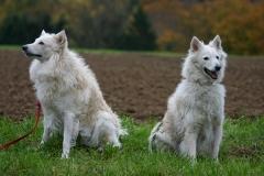 Acon und Kicsi