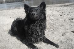 Elbe Sand Hund