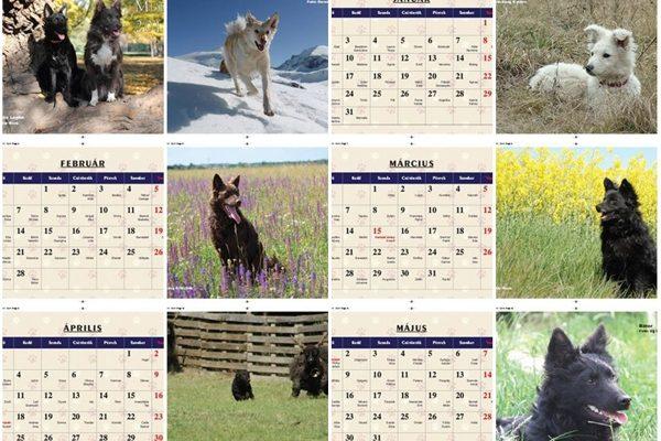 Mudi-Kalender 2017